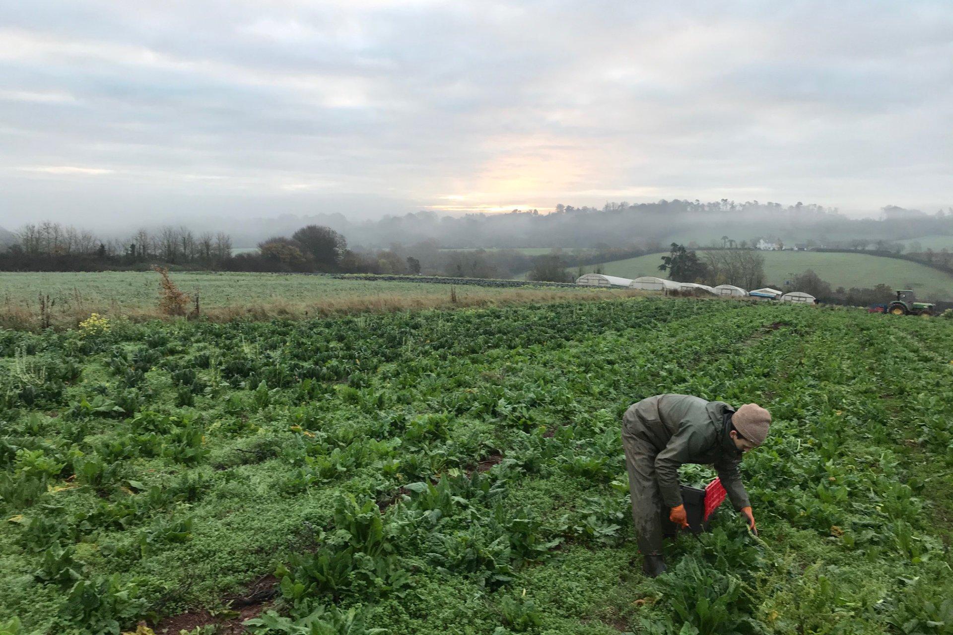 Shillingford Organics at Greenlife